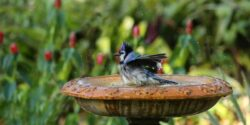 5 Types of Bird Baths In Your Yard